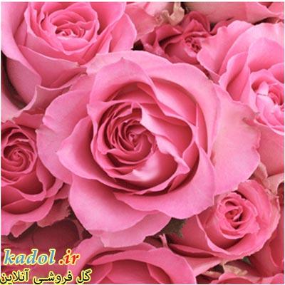 فروش عمده گل رز صورتی