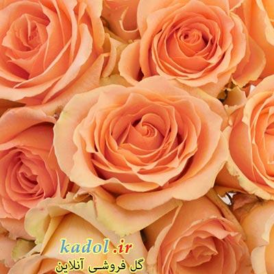 فروش عمده گل رز نباتی یا هلویی