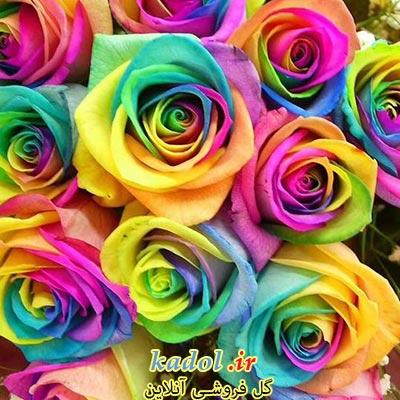 فروش عمده گل رز رنگین کمانی یا هفت رنگ