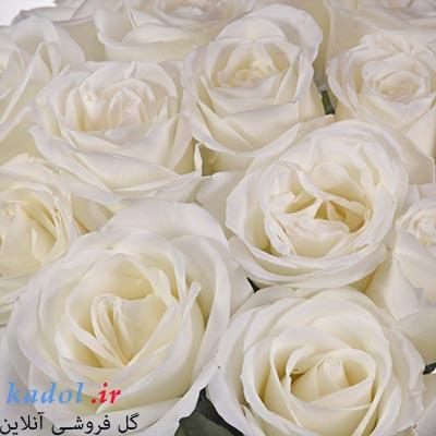 فروش گل رز سفید عمده