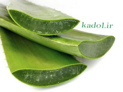 درمان دیابت با گیاه آلوورا